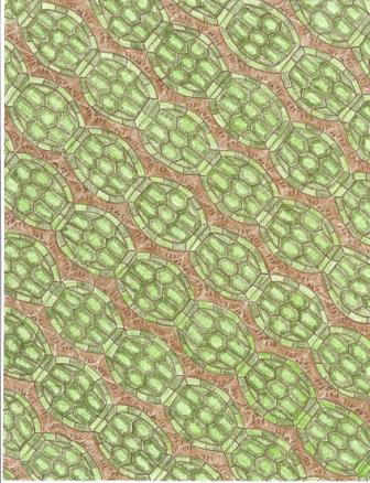 Ninja Turtle Tessellation
